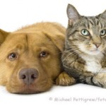 Tiergerüche entfernen