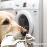 Waschmaschine stinkt