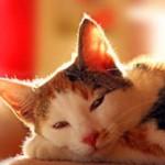 dauerhaftes entfernen von Katzenurin
