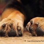 Hundegeruch beseitigen