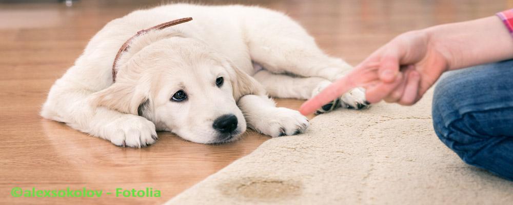 Hundeuringeruch entfernen